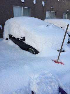 雪 291201.jpg